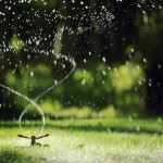 How to Keep Your Lawn Healthy with Limited Water