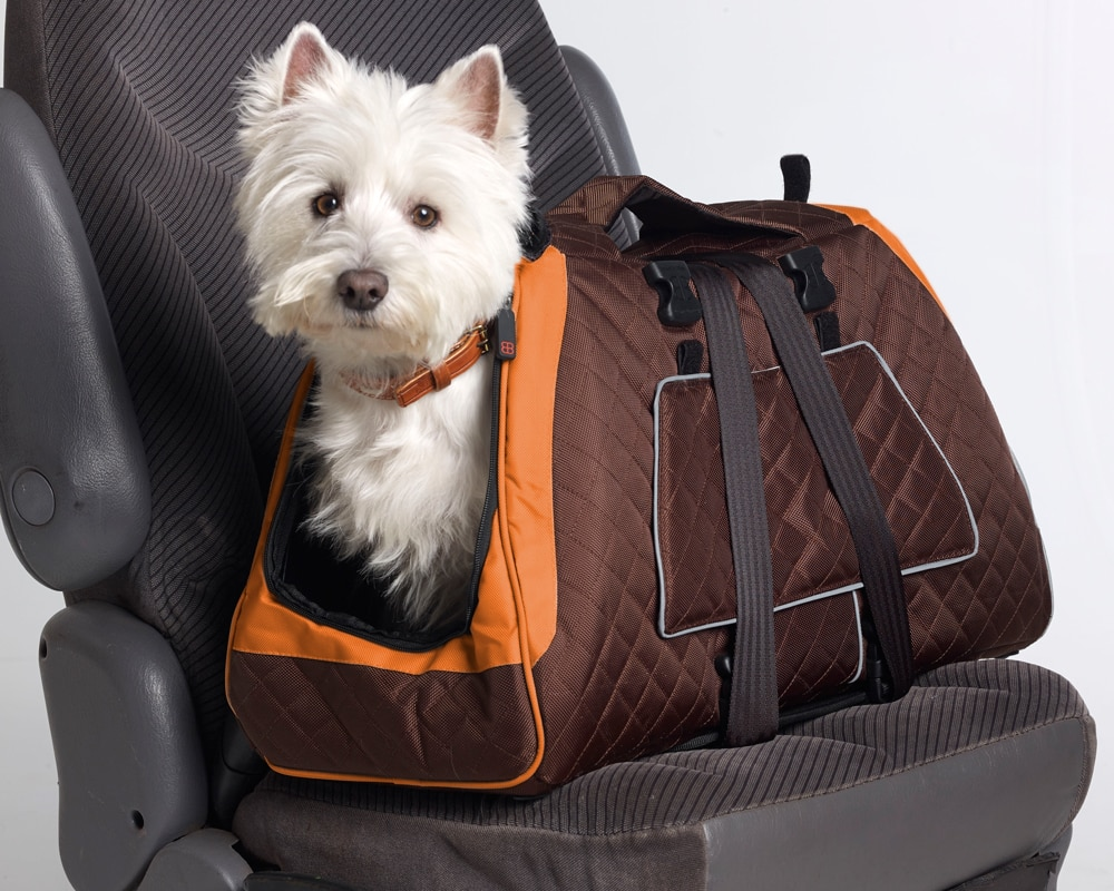 How to Transport Your Pets Safely and Legally