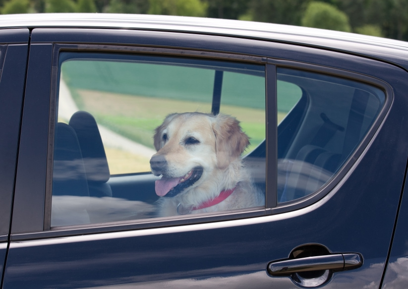 Should Windows be Broken to Save Dogs in Hot Cars?